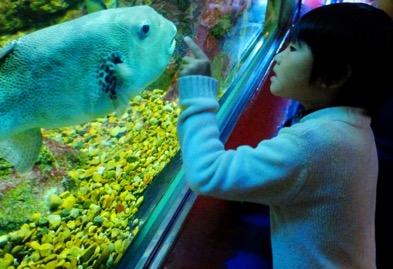 雨の過ごし方 小学生 水族館
