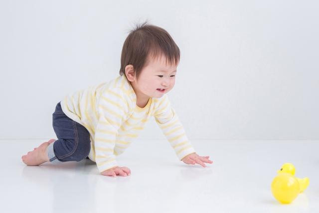 0歳児 運動会 親子競技